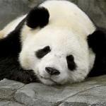 Mise à jour Panda: Votre site a-t-il un contenu riche?